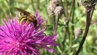 Bienengarten Nickelsdorf