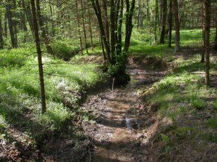 Kartierungsmethodik Fließgewässer Burgenland