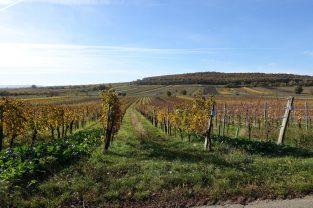 Ökologisierung Weingartenfläche