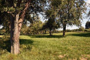 BiDiMo Burgenland Süd