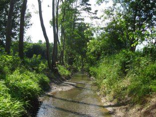 Pflegeplan Uferbegleitvegetation Rabnitz