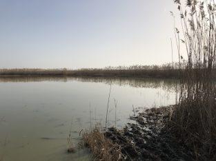 Feber 2021: Salzausbringung Sodalacken Seewinkel (KH)