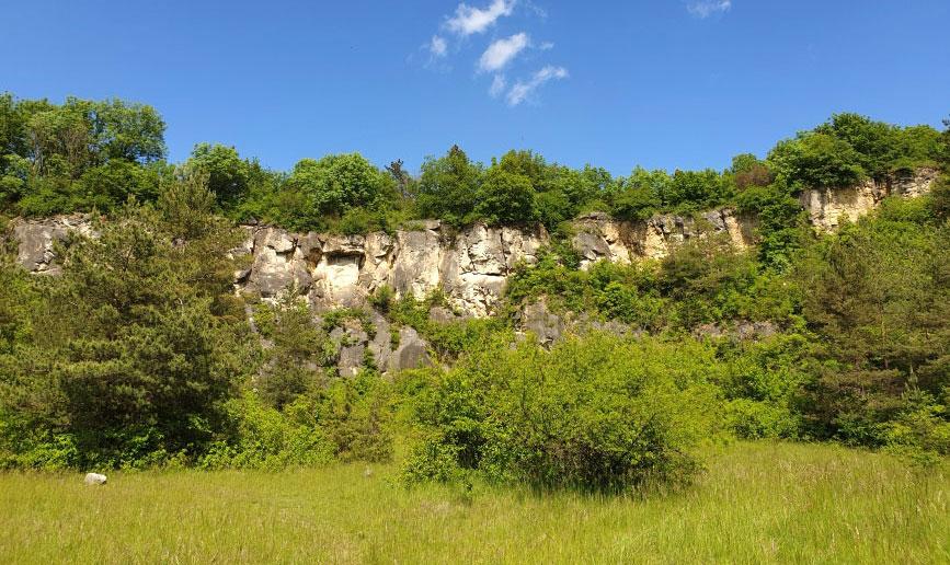 Mai 2021: Trockenrasenexkursion Hundsheimer Berge