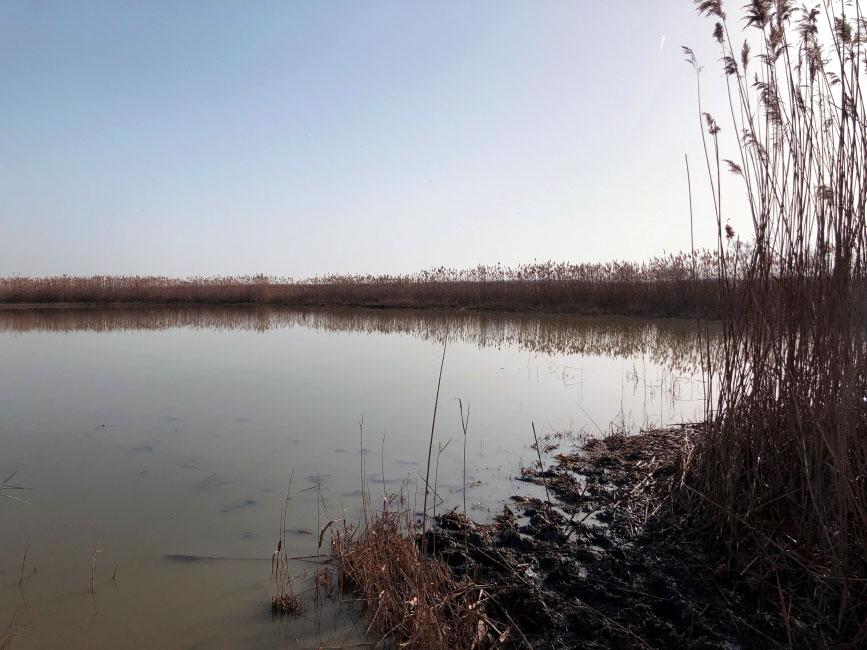 Feber 2021: Salzausbringung Sodalacken Seewinkel