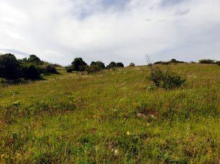 Mai 2021: Purbacher Heide