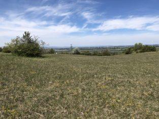 Mai 2021: Schutzgebietsbegehung Stotzinger Heide